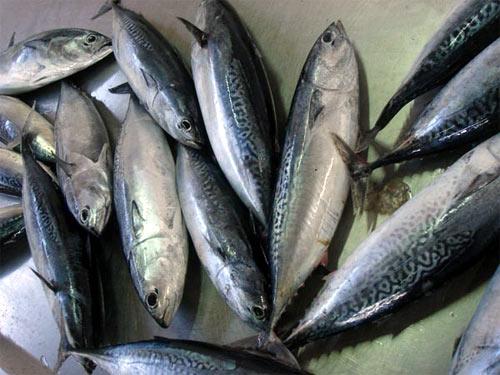Gaditana de pescados s&l fashions dress collection
